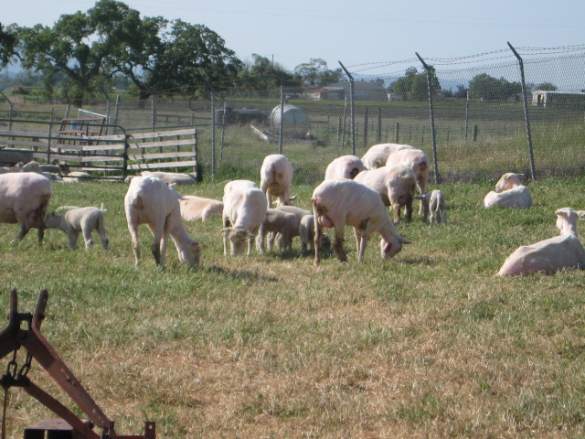 Band and shearing 009