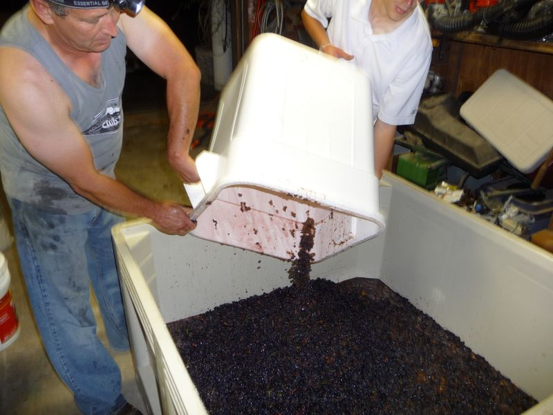 2009 harvest and wine making 028