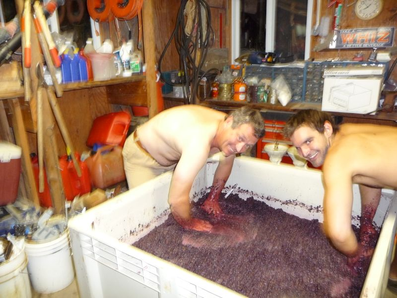 2009 harvest and wine making 052